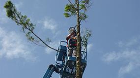 treesurgury